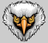 Balded eagle — Stock Vector