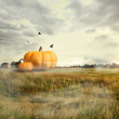 Big pumpkins in a field, halloween time — Stock Photo #40014885