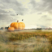 Big pumpkins in a field, halloween time — Stok fotoğraf
