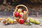 Vintage fall basket full of apples and pears on nature background — Stock Photo
