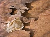 Dry leaf — Stock Photo
