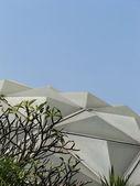 Frangipani and glasshouse roof — Stock Photo