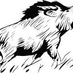 Постер, плакат: Wild pig