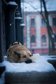 A dog in a city — Stock Photo