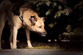 茂みの中で犬 — ストック写真