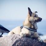 The dog at Bay — Stock Photo