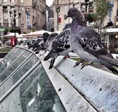 Pigeons on the roof — Stock Photo