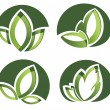 Set Of Green Leaves Design Elements — Stock Vector