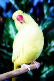 Parot on tree — Stock Photo