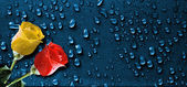 Roses over drops background — Stock Photo