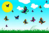 Butterflies in field — Stock Photo