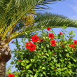 Palm and hibiscus — Stock Photo #40300827