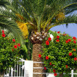 House fence with palm and hibiscus — Stock Photo #40301387