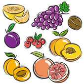 Set of fruits, grapes,melon,apricot,peach, vector — Stock Vector