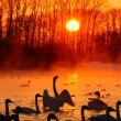 Постер, плакат: Sunset on the bright Swan Lake in winter