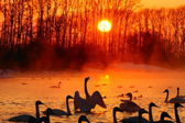 Sunset on the bright (Swan) Lake in winter. — Stock Photo