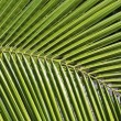 Stock Photo: Partial view of palm leaf