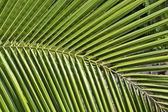 Partial view of a palm leaf — Stock fotografie