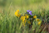 Bouquet of spring wildflowers on the grass — Stock Photo