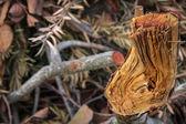 Holz bricht — Stockfoto