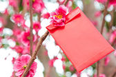 Chinese red pocket — Stockfoto
