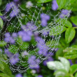 Stock Photo: Small drops of water captured in spider web