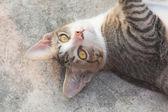 Closeup portrait of cat face — Stock Photo
