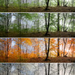 ������, ������: Four seasons in forest