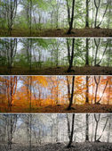 Four seasons in  forest — Stock Photo