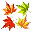 Autumn leafs — Stock Vector