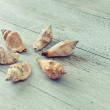 Holiday memories: decorative seashells — Stock Photo