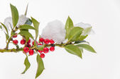 Isolated snowcovered holly twig with berries — Stock Photo
