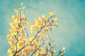 Sunny autumn day and colorful leaves — Stock Photo