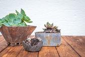 Small plants in rusty flowerpots — Stock Photo