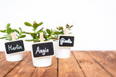 Small pot plants with name signs — Stock Photo