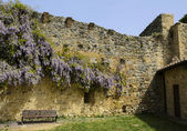 Flowering Wisteria on the wall in San Gimignano, Italy — Stock Photo