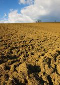 Plowed land with trees in the background — Stock Photo