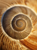 Spiral snail shell in the evening light — Stock Photo
