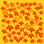 Autumn maple background — Stock Vector