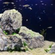 Stock Photo: Aquascape