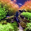 Aquascape — Stock Photo