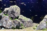 Aquascape — ストック写真