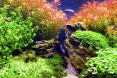 Aquascape — Stockfoto