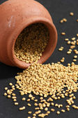 Fenugreek is used both as an herb (the leaves) and as a spice (the seeds) — Stock Photo