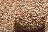 Soyabean - a legume often used like vegetable. — Stock Photo