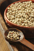 White Pepper Corn — Stock Photo