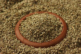 Ajwine or Carom Seeds is an uncommon spice. — Stock Photo