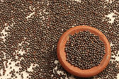 Mustard seeds are the small seeds from Europe — Stock Photo