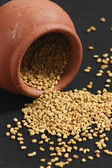 Fenugreek seeds — Stock Photo