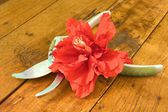 Red Hibiscus and pruning shears — Stock Photo